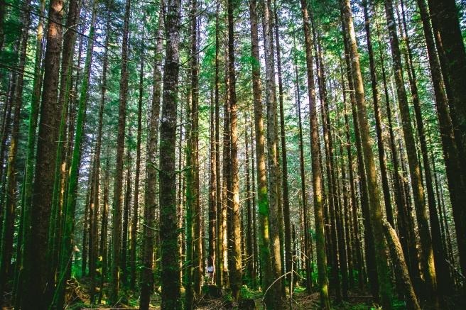 korzyści z kontaktu z naturą